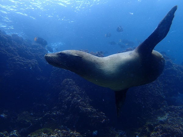 Ecuador: Expeditions Galapagos